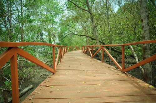 Pesona Hijaunya Jembatan Manggrove Batukaras