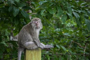 Tingkah Lucu Penghuni Taman Wisata Alam Pangandaran