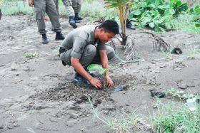 Penghijauan Kawasan Sempadan Pantai Barat Pangandaran