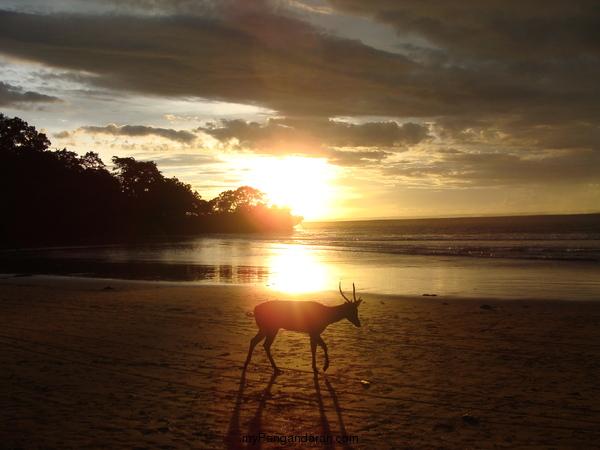 Beautiful Sunset On Pangandaran Beach