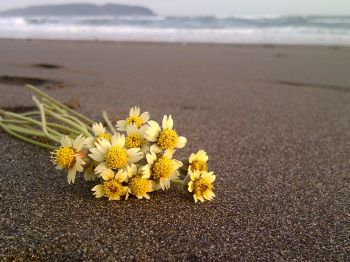 Bunga diatas Lembutnya Pantai Indah Pangandaran