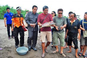 PT. Adira Finance Jogja Berikan Donasi Penangakaran Penyu Batu Hiu
