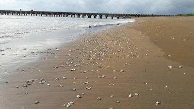 Butiran Batu Karang Hiasi Pantai Bojong Salawe Parigi Pangandaran