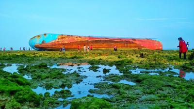 Hijaunya Hamparan Rumput Laut dan Terumbu Karang Hari Ini