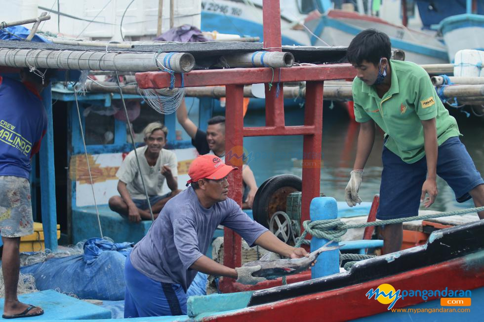 Kegiatan Bongkar Ikan di Pelabuhan PPI Cikidang Pangandaran