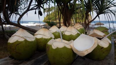 Menikmati Segarnya Kelapa Muda di Pantai Madasari Pangandaran