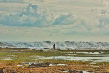 Pencari Rumput Laut Di Pantai Karapyak