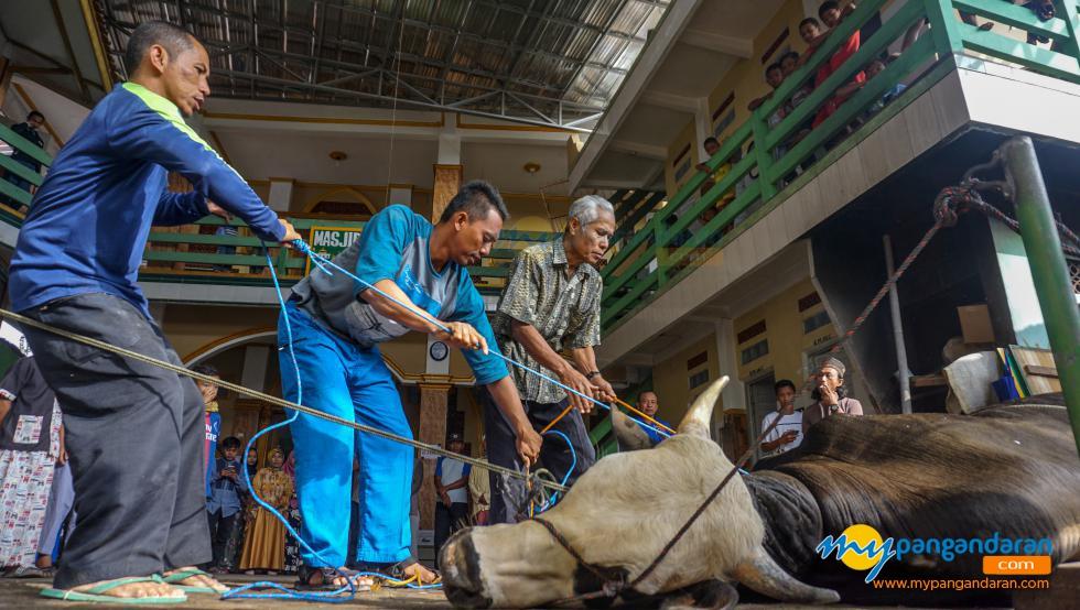 Potret Penyembelihan Hewan Kurban di Mesjid Khusnul Khotimah Pangandaran