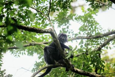 Potret Si Hitam Manis Penghuni Taman Wisata Cagar Alam Pangandaran